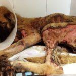 Más cárcel para el maltrato animal